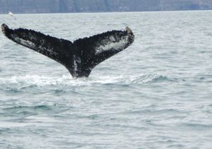 Wale in Dalvik